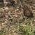 fekete · rigó · keres · természet · tájkép · madár · toll - stock fotó © Rosemarie_Kappler