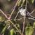 sessão · ramo · natureza · paisagem · pássaro · pena - foto stock © Rosemarie_Kappler
