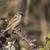 ház · veréb · ül · ág · természet · madár - stock fotó © Rosemarie_Kappler