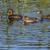 lagoa · água · natureza · paisagem · ao · ar · livre - foto stock © Rosemarie_Kappler
