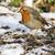 árvore · paisagem · neve · pássaro · inverno - foto stock © Rosemarie_Kappler