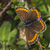 marrom · sessão · flor · árvore · grama · borboleta - foto stock © Rosemarie_Kappler