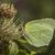 árvore · grama · borboleta · asas · prado · insetos - foto stock © Rosemarie_Kappler