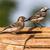 branco · sessão · cerca · pássaro - foto stock © rosemarie_kappler