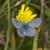 common blue polyommatus icarus stock photo © rosemarie_kappler