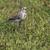 branco · grama · natureza · fundo · pássaro - foto stock © rosemarie_kappler