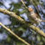 natureza · pássaro · pena · animal · sessão · animais · selvagens - foto stock © Rosemarie_Kappler