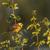 sessão · ramo · paisagem · pássaro · pena · animal - foto stock © Rosemarie_Kappler