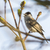 sessão · ramo · árvore · floresta · natureza · aves - foto stock © Rosemarie_Kappler