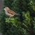 casa · pardal · sessão · ramo · natureza · pássaro - foto stock © Rosemarie_Kappler