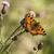 wenig · Schmetterling · farbenreich · orange · Tier - stock foto © rosemarie_kappler
