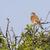 ponto · pássaro · pena · animal · veja - foto stock © Rosemarie_Kappler