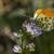 laranja · árvore · grama · borboleta · asas · prado - foto stock © Rosemarie_Kappler