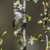 lesser whitethroat (Sylvia curruca) stock photo © Rosemarie_Kappler