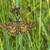 sessão · grama · borboleta · verde · asas · prado - foto stock © Rosemarie_Kappler