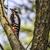 sessão · árvore · tronco · natureza · paisagem - foto stock © Rosemarie_Kappler