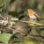 robin redbreast erithacus rubecula stock photo © rosemarie_kappler