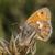 pequeno · borboleta · árvore · grama · asas · prado - foto stock © Rosemarie_Kappler