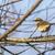 água · paisagem · pássaro · pena · animal · sessão - foto stock © Rosemarie_Kappler