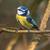 azul · teta · sessão · ramo · árvore - foto stock © Rosemarie_Kappler