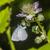 colina · azul · sessão · flor · árvore · grama - foto stock © Rosemarie_Kappler