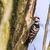 zoeken · boom · stam · natuur · landschap · vogel - stockfoto © Rosemarie_Kappler