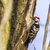 árvore · tronco · natureza · paisagem · pássaro - foto stock © Rosemarie_Kappler