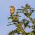 sessão · ramo · árvore · paisagem · pássaro · aves - foto stock © Rosemarie_Kappler