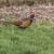 agradável · campo · árvore · paisagem · pássaro · pena - foto stock © Rosemarie_Kappler