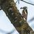 ツリー · 自然 · 風景 · 羽毛 · 動物 · 腕 - ストックフォト © Rosemarie_Kappler