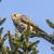 sessão · pássaro · pena · animal · veja · ao · ar · livre - foto stock © Rosemarie_Kappler
