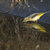 grama · pássaro · preto · branco - foto stock © rosemarie_kappler
