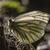 witte · licht · boom · gras · vlinder · vleugels - stockfoto © Rosemarie_Kappler