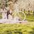 piknik · kiraz · çiçeği · bisiklet · iki · beyaz - stok fotoğraf © runzelkorn