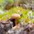 小 · 菌 · 成長 · 緑 · 苔 · 森林 - ストックフォト © ruslanomega