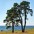 two trees on the shore of the lake stock photo © ruslanomega
