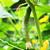 свежие · саду · огурцы · травы · приготовления · деревянный · стол - Сток-фото © ruzanna