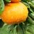 mandarijn · boom · grens · witte · natuur - stockfoto © ruzanna