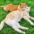 кошек · красный · зеленая · трава · любви · трава - Сток-фото © ruzanna