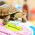 teknős · Vörös-tenger · hal · tájkép · tenger · háttér - stock fotó © ruzanna