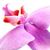 蘭 · ピンク · 孤立した · 白 · 花 · 葉 - ストックフォト © ruzanna