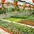 плантация · дома · красочный · цветы · Кипр · природы - Сток-фото © ruzanna