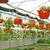 подвесной · цветы · банка · великолепный · кирпичная · стена · стены - Сток-фото © ruzanna