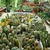 tropikal · bahçe · duvar · taş · bitki · antika - stok fotoğraf © ruzanna