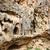 rock · show · krachtig · erosie · zandsteen · vallei - stockfoto © ruzanna
