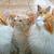 влажный · котенка · белый · прелестный · воды · ребенка - Сток-фото © ruzanna