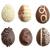 шоколадом · яйца · яйцо · интерьер · куриные - Сток-фото © saddako2
