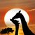 silhouettes of giraffes stock photo © saddako2