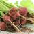 vers · organisch · boerderij · radijs · groene · bladeren · geïsoleerd - stockfoto © saddako2