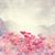 poppy flowers stock photo © saddako2